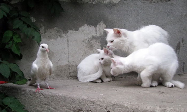 Фотографы шутят - кошки-9