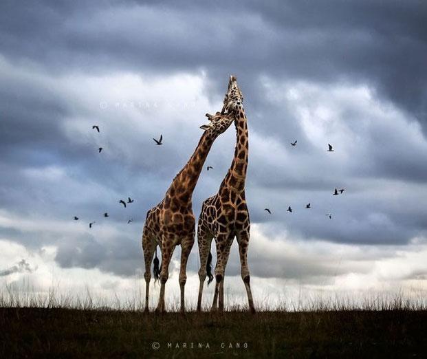 фотографии животных-17