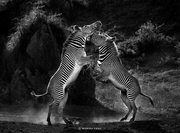 фотографии животных-22