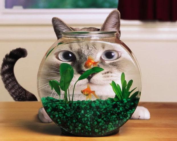 Фотографы шутят - кошки-5