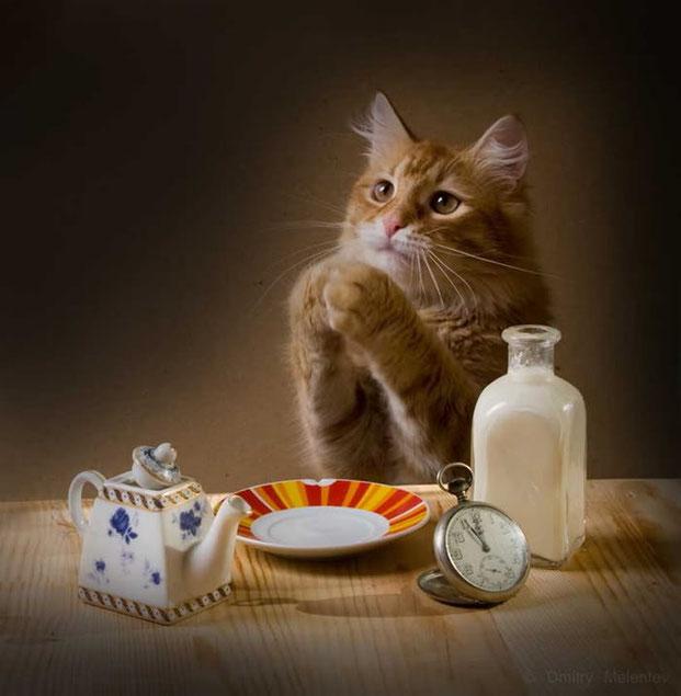 Фотографы шутят - кошки-2