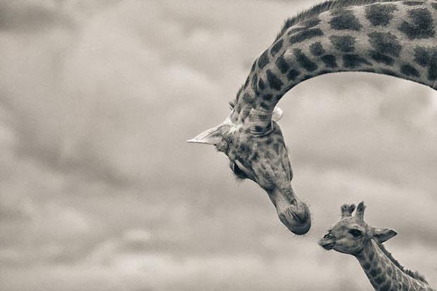 фотографии животных-13
