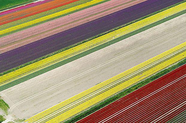 поля тюльпанов-8