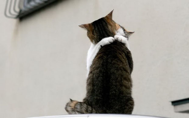 Фотографы шутят - кошки-19