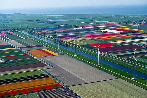 поля тюльпанов-9