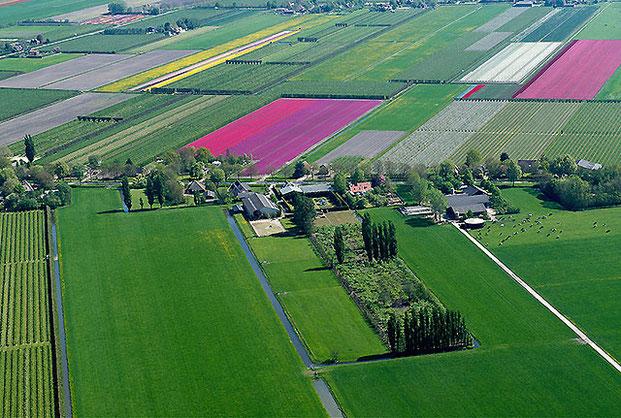 поля тюльпанов-10