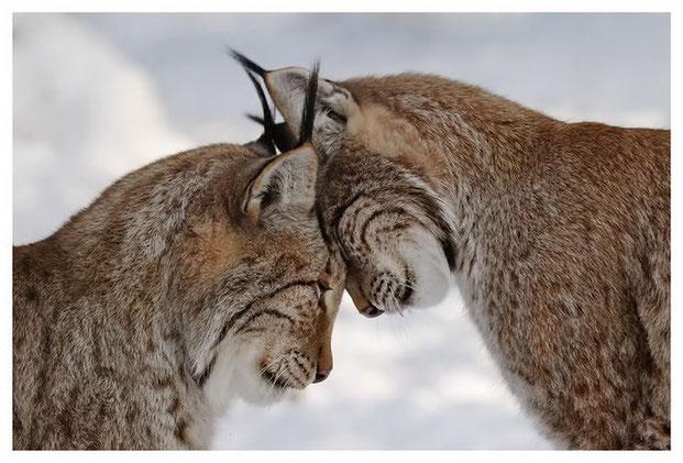 Фотографы шутят - кошки-12