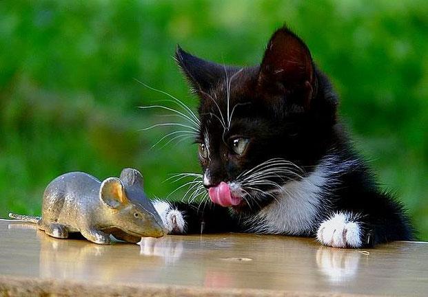 Фотографы шутят - кошки-3