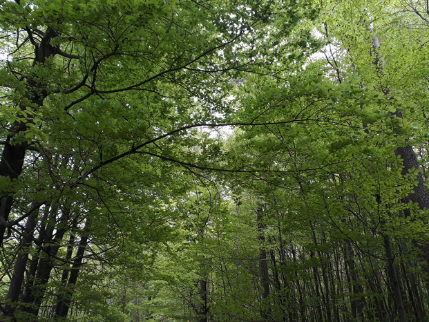 Ketterwald im Sommer