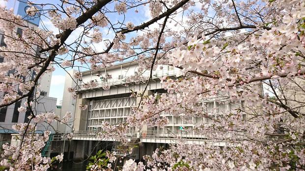 出かけたのは桜が満開を過ぎた頃