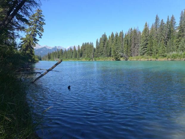 Canada Alberta Lake