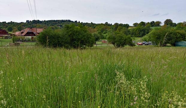 Blick über Weide Nr. 2, Ende Mai 2019
