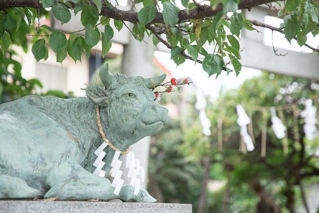 板橋区 徳丸北野神社 本殿 七五三 お宮参り 出張撮影 女性カメラマン