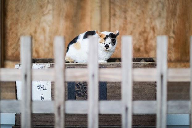 豊島区 出張撮影 女性カメラマン 猫 法明寺 七五三 お宮参り 料金安い