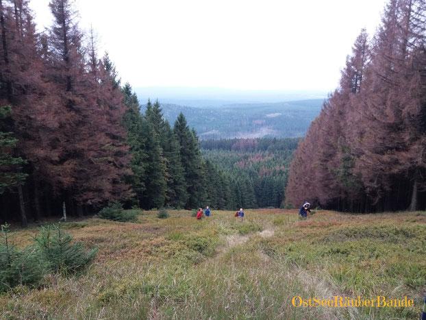 """Unsere Wurmberg-Gipfelfotos sind voller Menschen, die ich hier nicht veröffentlichen will. Also ein """"Gipfelfoto"""" eines keineren Berges mit Abstieg Richtung Schierke."""