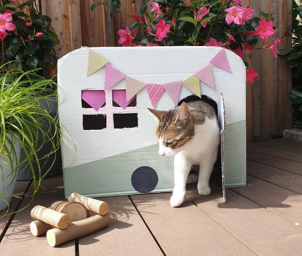 Katzenmädchen Kasi freut sich über den Kitty Camper aus Karton