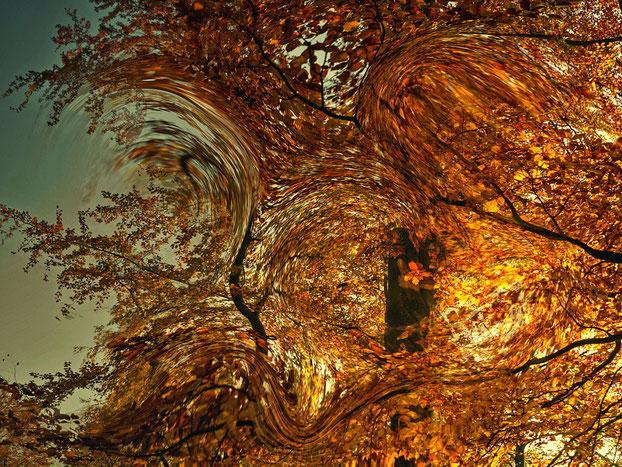 die Lichtgeister / Herbst I