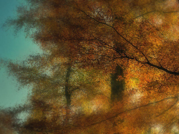 soft colours / Herbst II