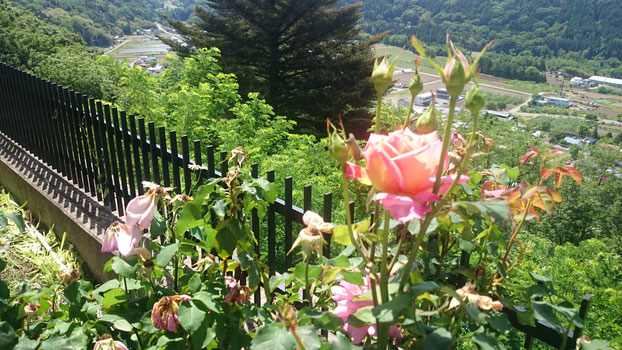 バラと河岸段丘