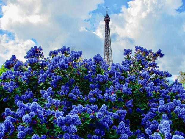 Bild: Blütenpracht im Garten unter dem Eiffelturm
