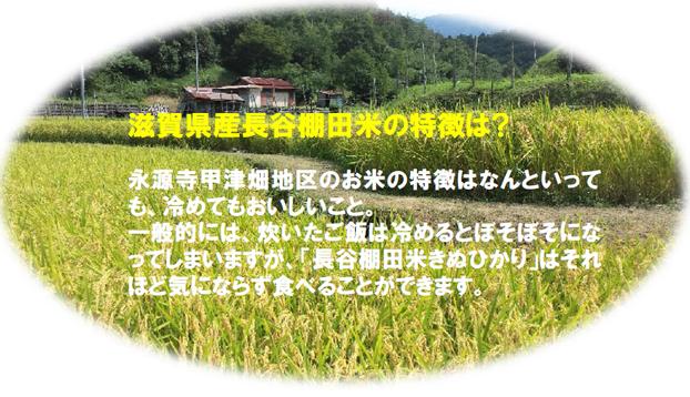 棚田米の特徴滋賀県産棚田米きぬひかりの写真