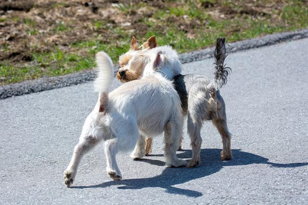 Hundestrand Hund Hundegeschichten
