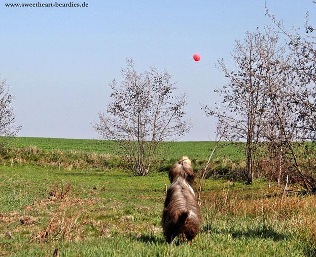 Wo ist der Ball ?