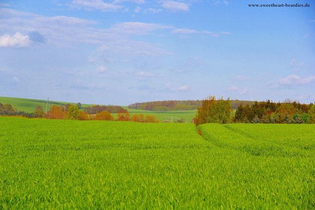 tolle Landschaft :-)