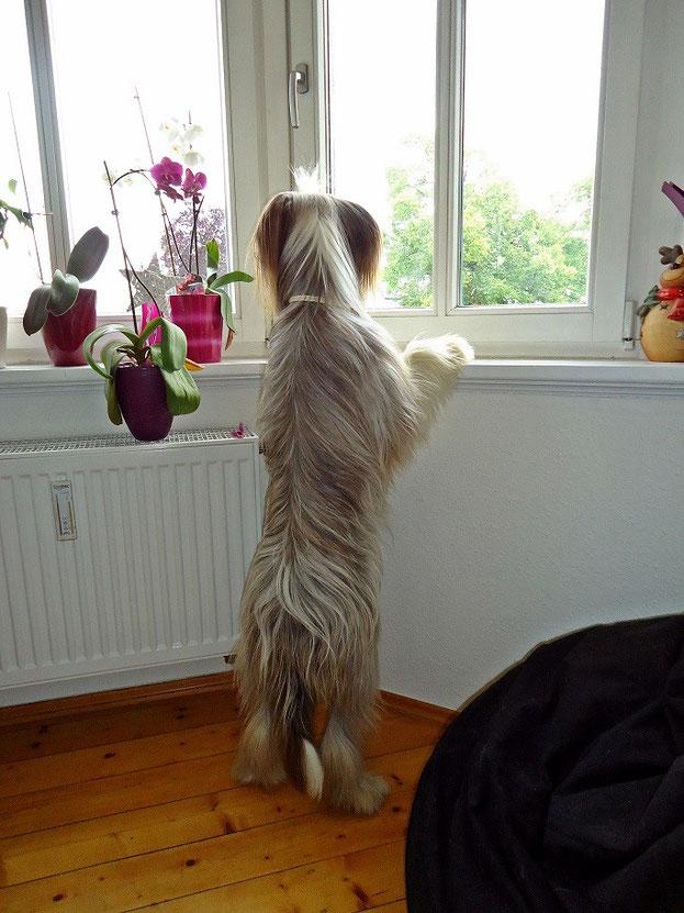 hat die Mami mich jetzt alleine gelassen? Wo ist die denn?