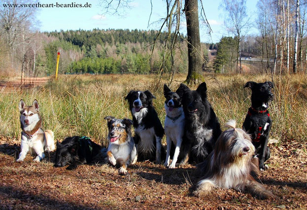 Amy, Whisky, Play, Milo, Nila, Monty, Micki und Ted