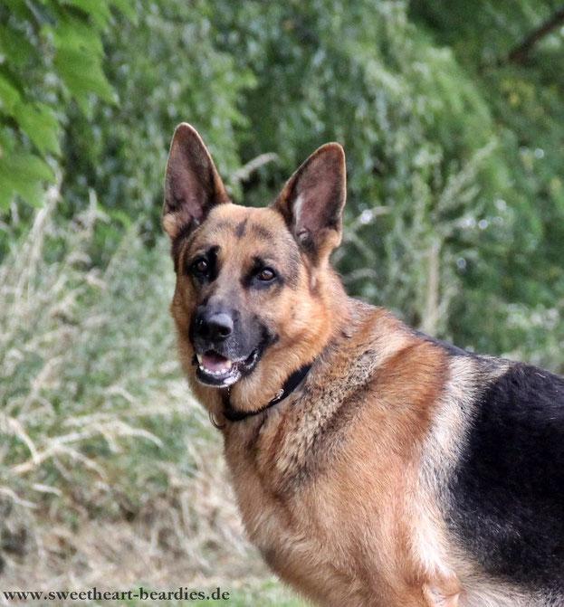 Hundekumpel Basko getroffen :-)