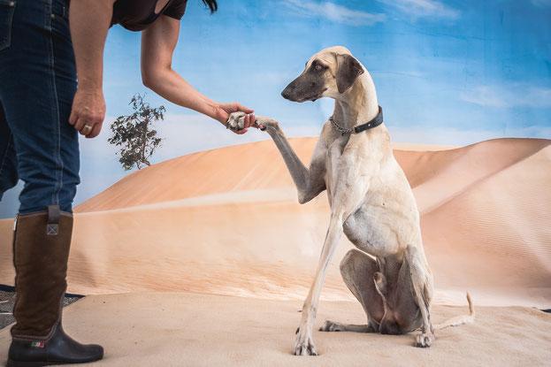 Hund Gibt Pfötchen