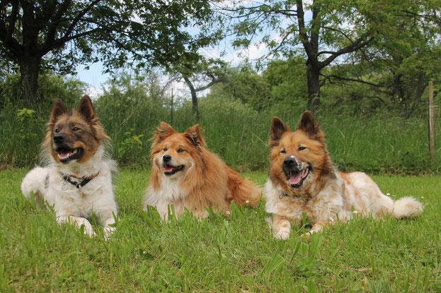 meine drei Mädels heute auf der Wiese!