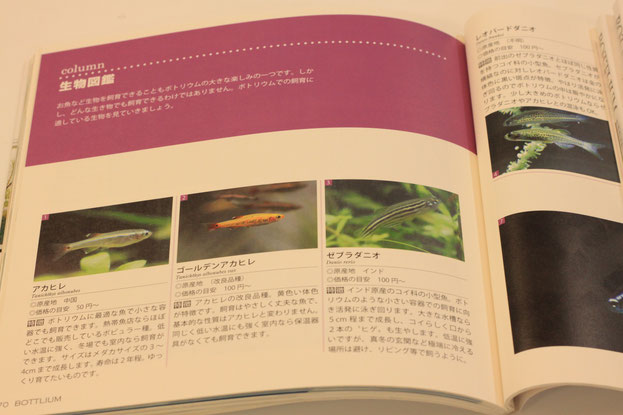 書籍【BOTTLIUM】 P70 生物図鑑より