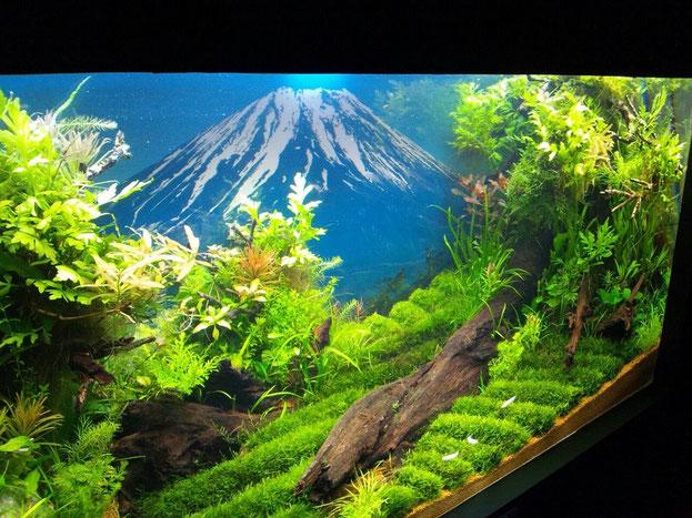 富士山を望む絶景作品