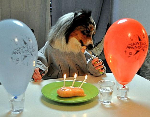 anniversaire, chien, party, dog, berger australien, happy birthday, joyeux anniversaire, cadeaux