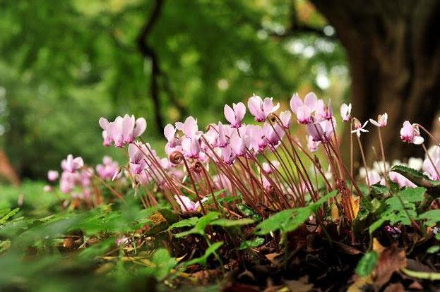 Datum Plantendag 2020 in Arboretum Kalmthout