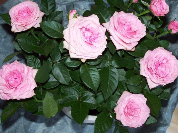 Meine kleine Entdeckung: Die Rosen in rosa im Blumentopf.