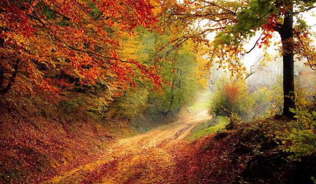 Herbst, Strasse, Bunt, Nebel, Weg, Wald, Blätter