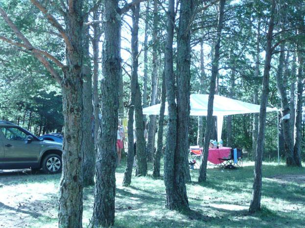 Un camping ombragé