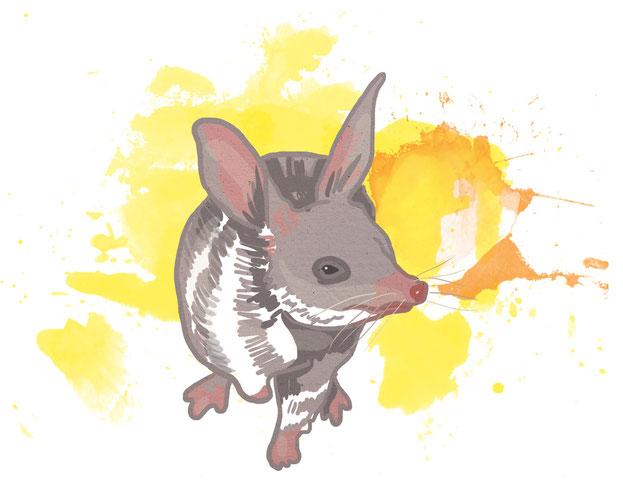 illustration eines großen kaninchennasenbeutlers