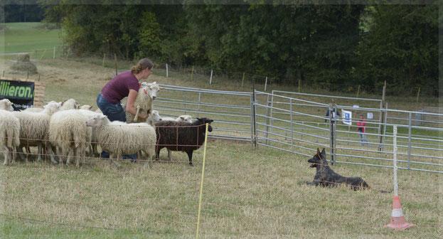 La Loba met Frasnay´s flair houdt de schapen tegen terwijl Eva een gemerkt schaap ontdoet van een lint.