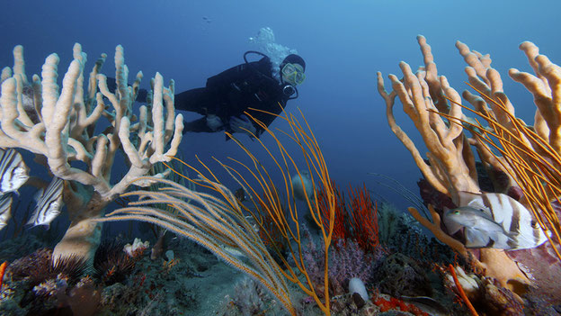 Foto: NOAA's National Ocean Service, CC-Lizenz (BY): http://www.flickr.com/photos/usoceangov/7309098432/