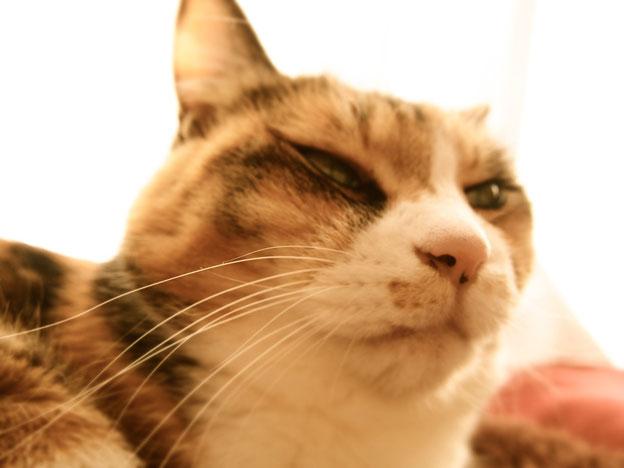 「あなたへ福来れにゃ」 福を呼ぶ猫さまでございます。