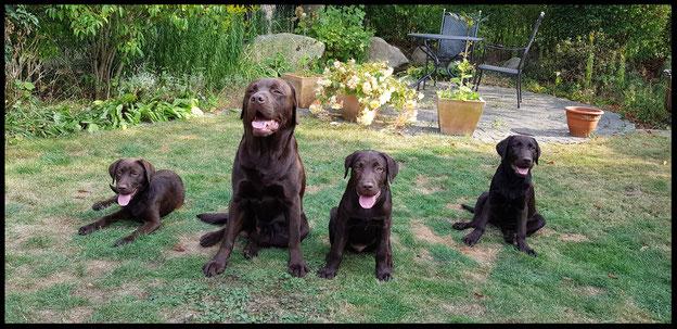 Scotty mit Luna, Bente und Ellie