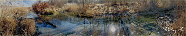 Pfynwald-Naturreservat