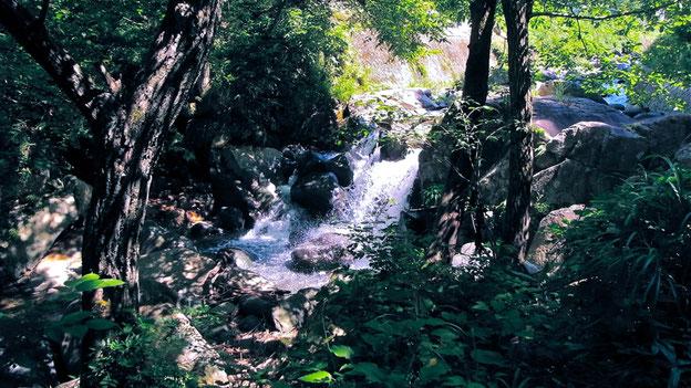 郡上の天然水&郡上の自然から生まれた石鹸 アトリエキク