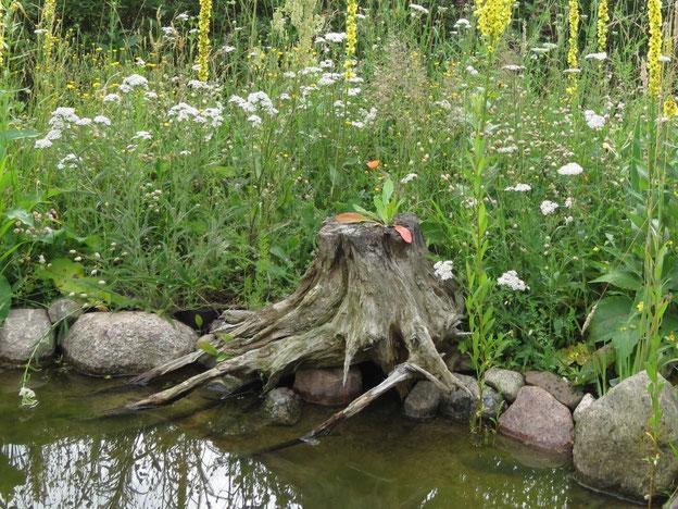 Naturnaher Gartenteich mit Baumwurzel