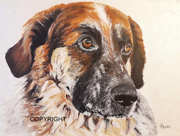 Kopfporträt: Hund von vorne, braune Augen, graue-schwarze Schnauze und rötlich-braunes Fell auf dem Kopf