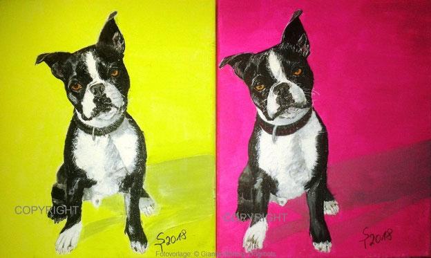 Hundeporträts: Französiche Bordeaudogge2 (schwarz-weiß) sitzen. Einmal vor gelbem Hintergrund und einmal vor pinkem Hintergrund. Hunde schauen Betrachter an, Tiermalerei, gemalte Tierportraits nach Fotovorlage, Tiere zeichnen lassen
